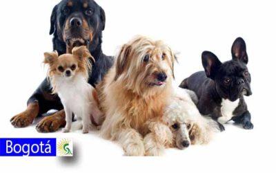 Agéndate y lleva a tu animal de compañía a la zoonavidad este domingo 15 de diciembre