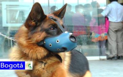 Bogotá les cumple a los animales: se van los perros anti evasión de TransMilenio